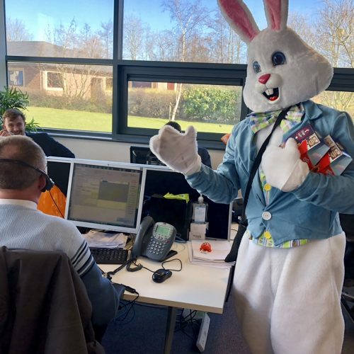 rabbit-in-office.jpg